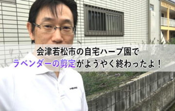 会津若松市の自宅ハーブ園でラベンダーの剪定がようやく終わったよ!