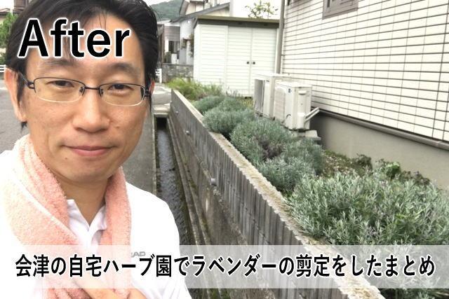 会津の自宅ハーブ園でラベンダーの剪定をしたまとめ