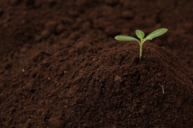 土による浄化